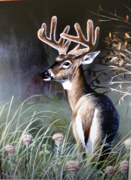 Wall Art - Painting - Buck In Velvet by Paul Makuchal