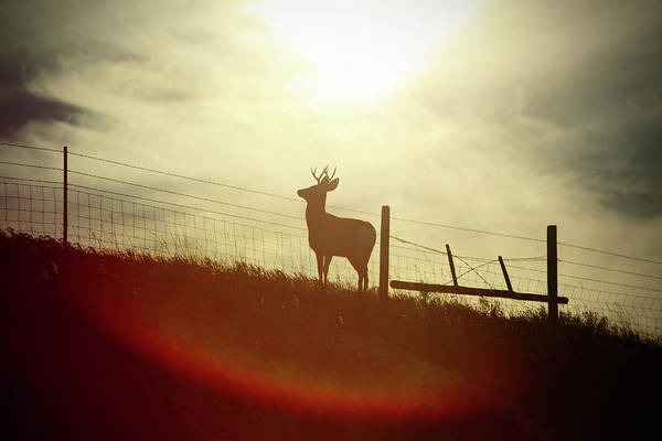 Photograph - Buck Silhouette by Todd Klassy