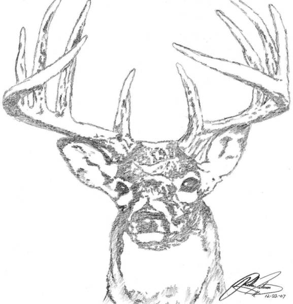 White Tailed Deer Drawing - Buck Sketch by Richie Tatum