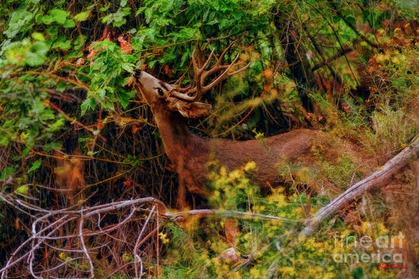 Photograph - Buck Strech by Blake Richards