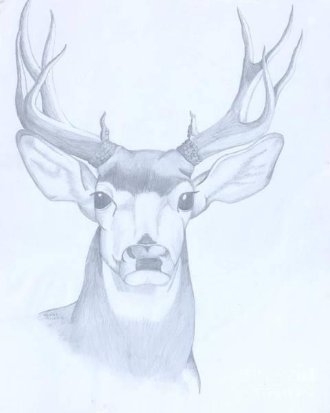 Whitetail Drawing - Buck by Teresa Trimble