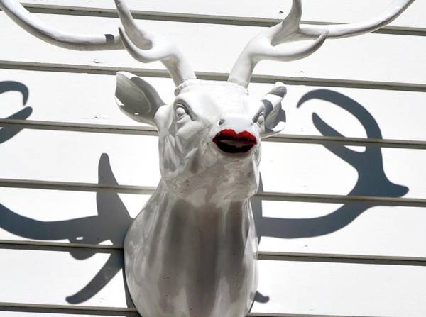 Photograph - Buck With Lipstick by Jerry Sodorff
