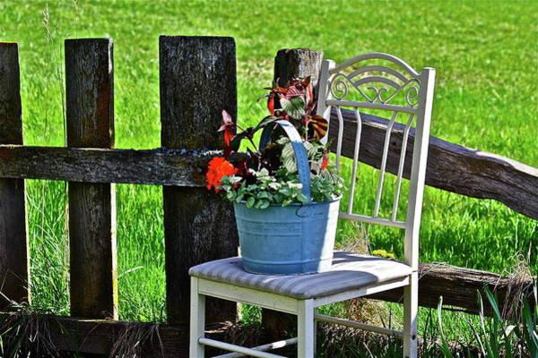 Photograph - Bucket Bouquet  by Diana Hatcher