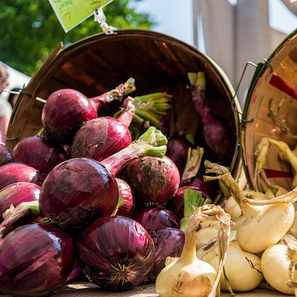 Photograph - Bucket Of Onions by Nisah Cheatham