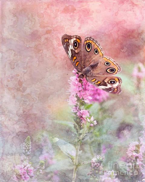 Buckeye Butterfly Wall Art - Photograph - Buckeye Bliss by Betty LaRue