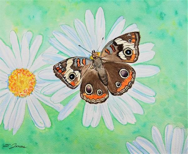 Painting - Buckeye On Oxeye by Sonja Jones