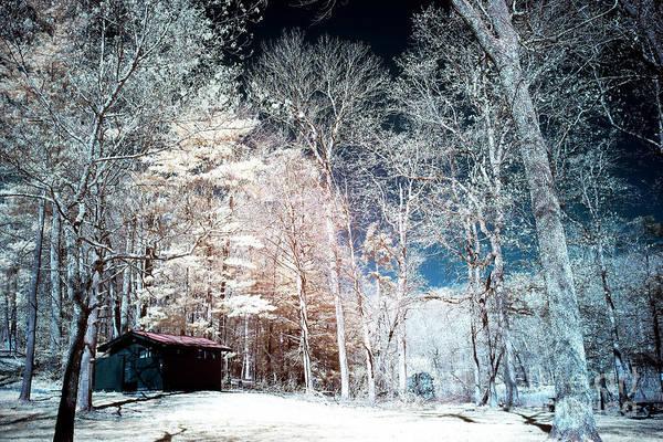 Photograph - Bucks County Woods Infrared by John Rizzuto