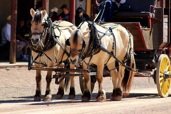 Photograph - Buckskin Horses by Colleen Cornelius