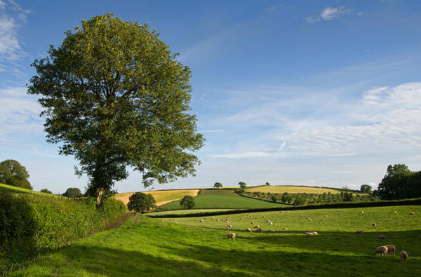 Photograph - Bucolic Mid Devon by Pete Hemington