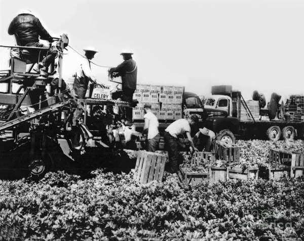 Photograph - Bud Celery Packing Machine And Trucks In Fields Circa 1955 by California Views Archives Mr Pat Hathaway Archives