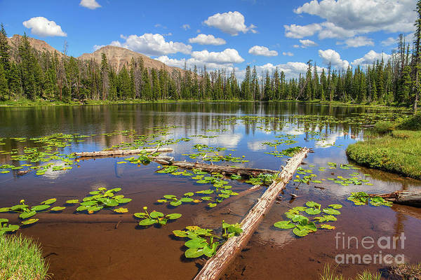 Photograph - Bud Lake by Spencer Baugh
