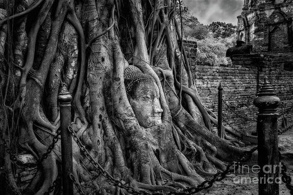 Wall Art - Photograph - Buddha Head Ayutthaya by Adrian Evans