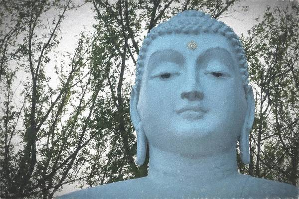 Photograph - Buddha Nature by Terry DeLuco
