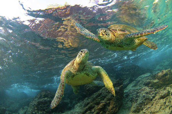 Turtle Photograph - Friends by James Roemmling