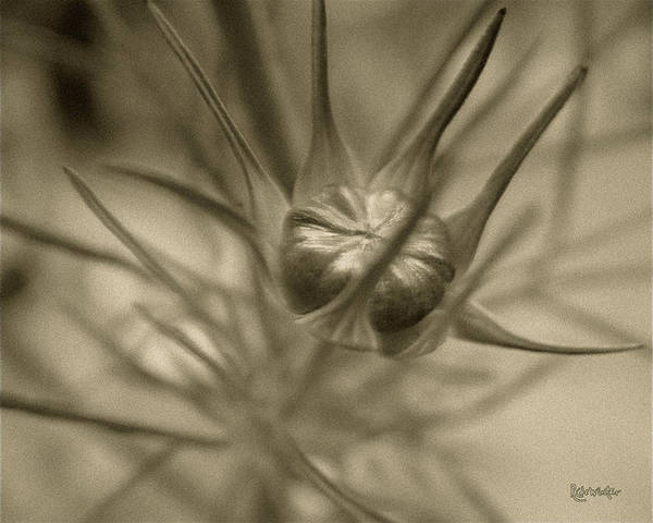 Photograph - Budding Beauty by RC DeWinter