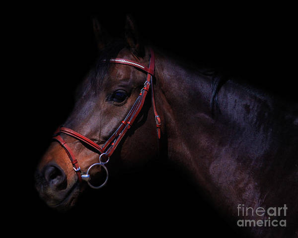Photograph - Buddy by Life With Horses