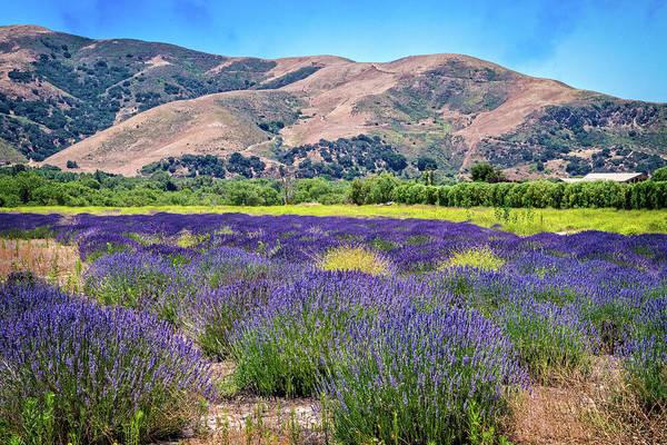 Photograph - Buellton Lavender Field by Lynn Bauer