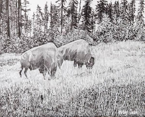 Drawing - Buffalo by Betsy Carlson Cross
