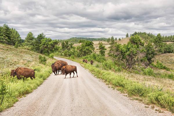 Photograph - Buffalo Crossing by John M Bailey