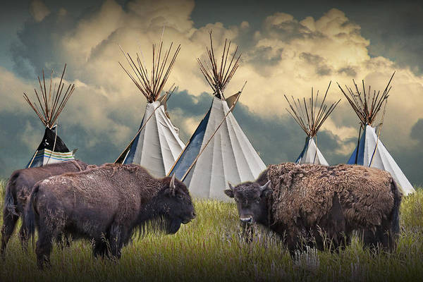 Powwow Wall Art - Photograph - Buffalo Herd On The Reservation by Randall Nyhof