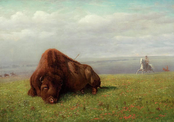 Herd Of Horses Wall Art - Painting - Buffalo Hunting by Albert Bierstadt