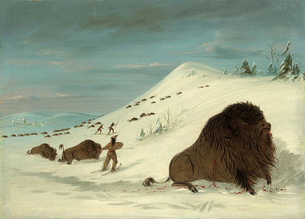 Wall Art - Painting - Buffalo Lancing In The Snow Drifts. Sioux by George Catlin