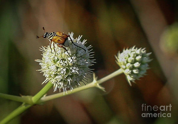 Photograph - Bug And Wildflower by Tom Claud