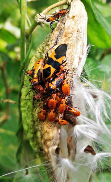 Photograph - Bug Convention 2 by Robert Knight