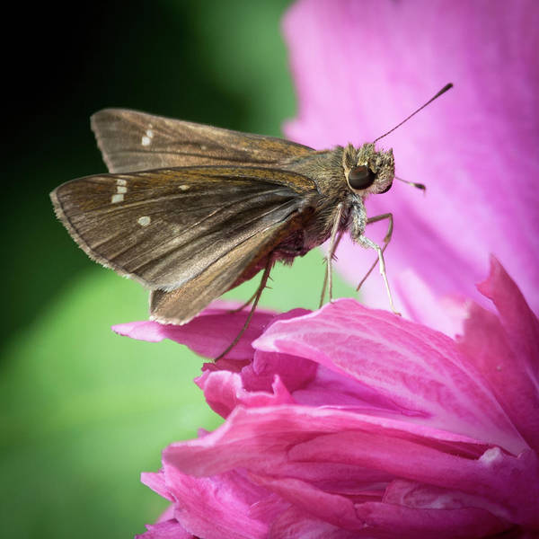 Photograph - Bug On A Flower by John Benedict