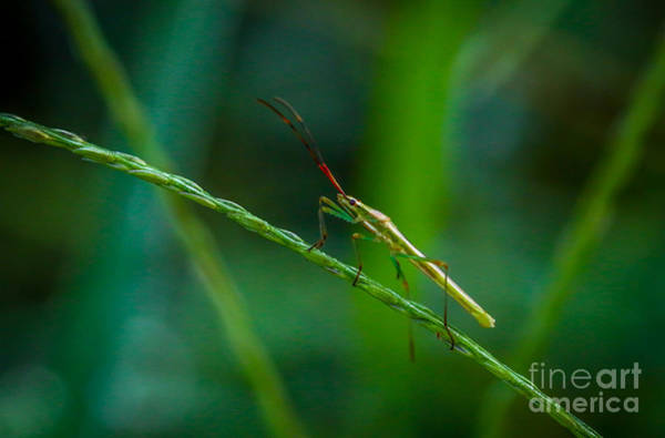 Photograph - Bug On Grass by Tom Claud
