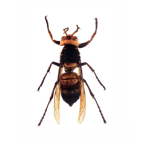 Photograph - Bug Series 001 by Clayton Bastiani