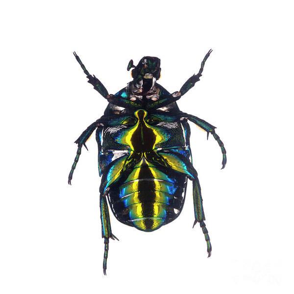 Photograph - Bug Series 003 by Clayton Bastiani