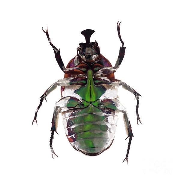 Photograph - Bug Series 005 by Clayton Bastiani