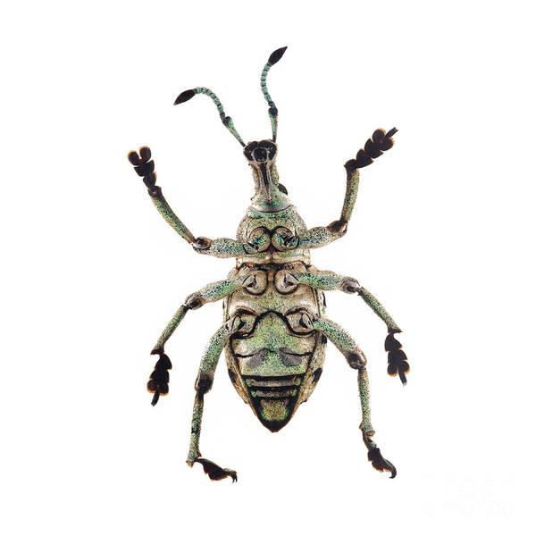 Photograph - Bug Series 006 by Clayton Bastiani