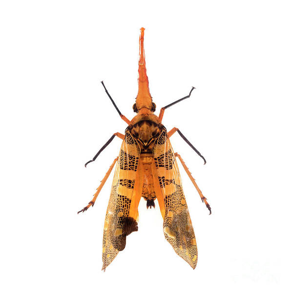 Photograph - Bug Series 008 by Clayton Bastiani