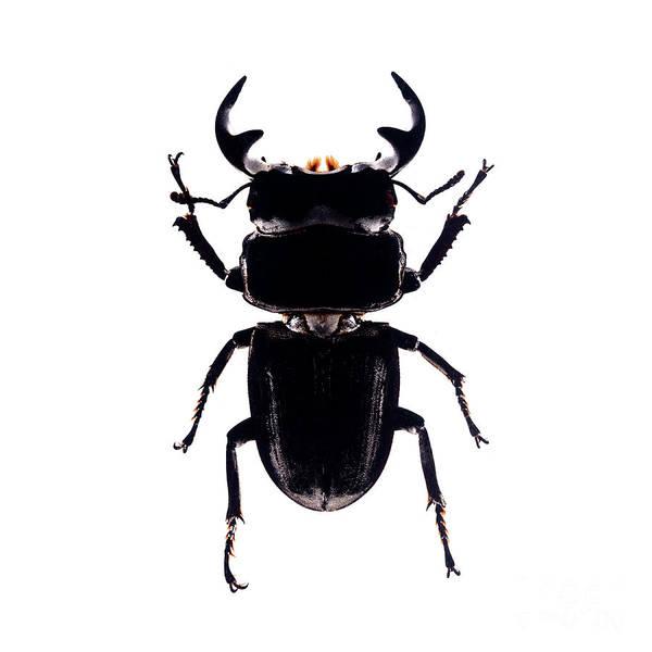 Photograph - Bug Series 010 by Clayton Bastiani