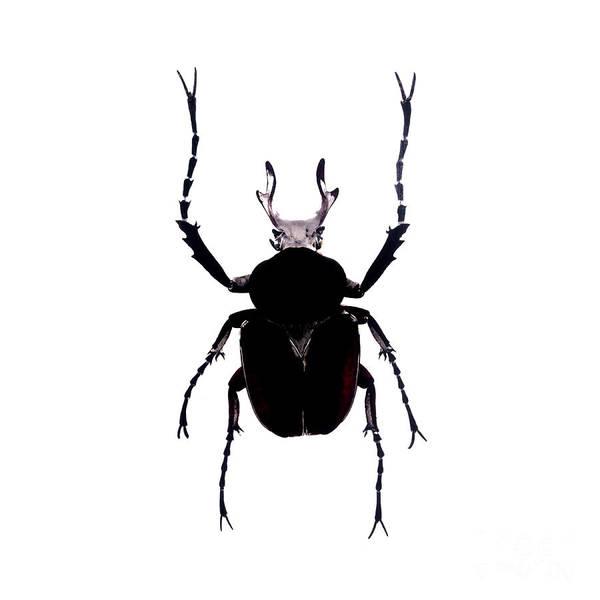 Photograph - Bug Series 012 by Clayton Bastiani