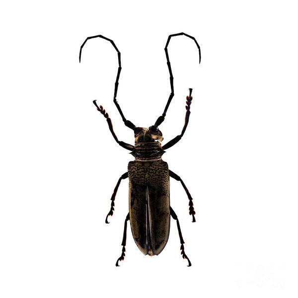 Photograph - Bug Series 017 by Clayton Bastiani