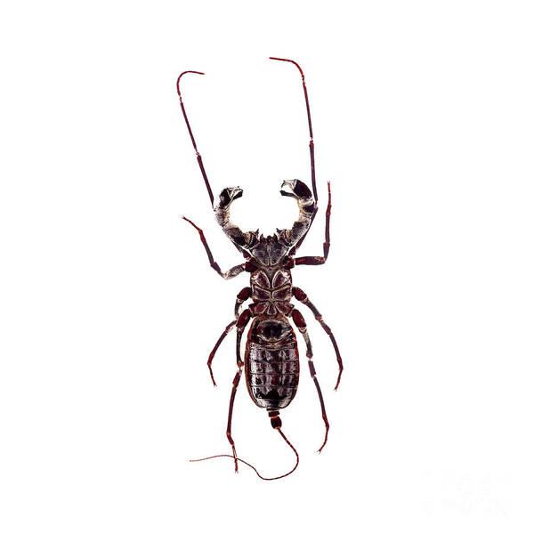 Photograph - Bug Series 019 by Clayton Bastiani