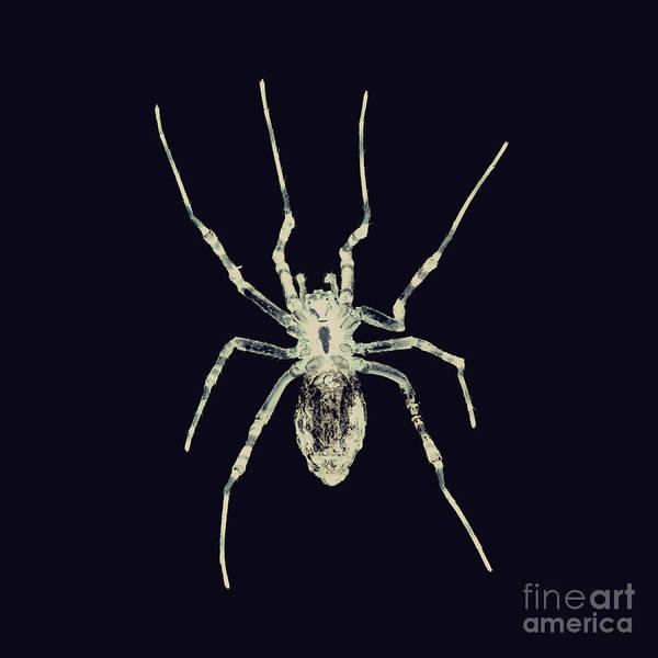 Photograph - Bug Series 022 by Clayton Bastiani