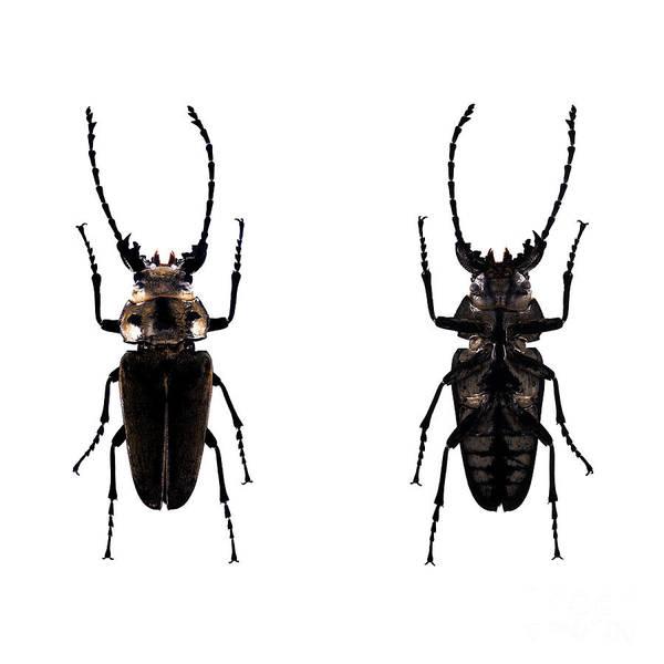 Photograph - Bug Series 030 by Clayton Bastiani