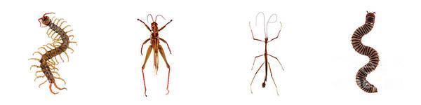 Photograph - Bug Series Long Bugs Set by Clayton Bastiani