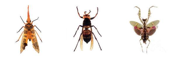 Photograph - Bug Series Winged Set by Clayton Bastiani
