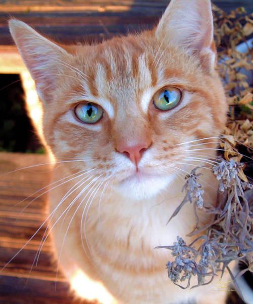 Photograph - Bug The Cat by Sam Davis Johnson