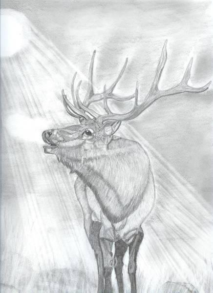 Elk Mountain Drawing - Bugling Elk by Don  Gallacher