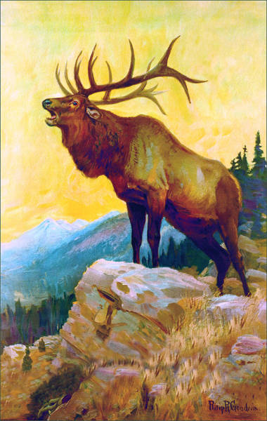 Wall Art - Painting - Bugling Elk by Philip R Goodwin