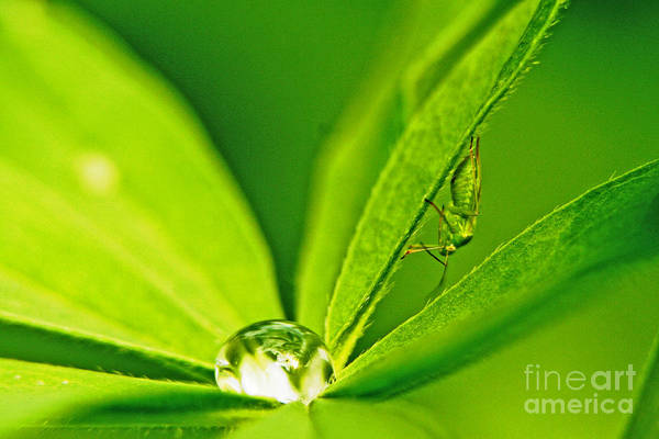 Photograph - Bug's Eye View by Richard Lynch