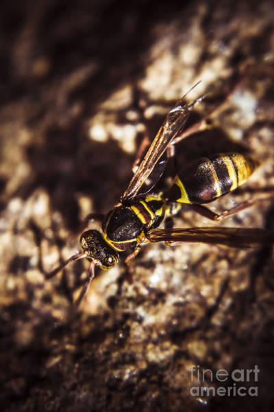 Wasp Photograph - Bugs Life by Jorgo Photography - Wall Art Gallery