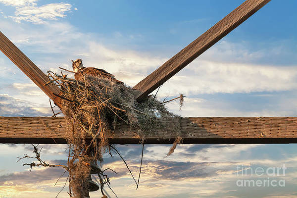 Photograph - Building The Nest by Dale Powell