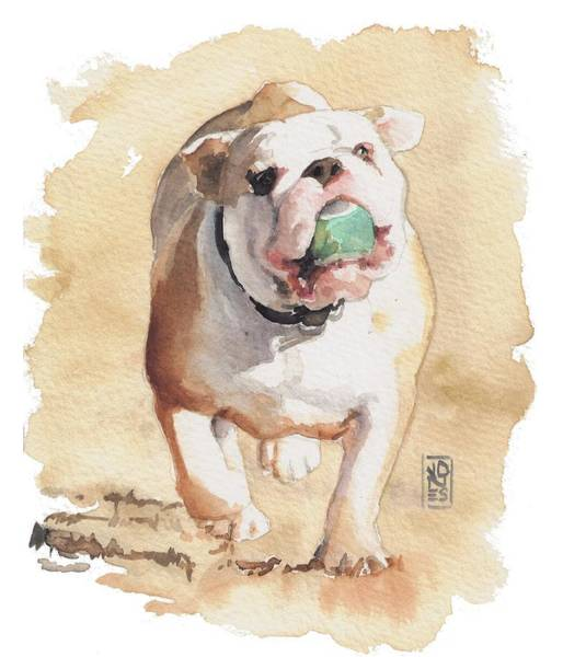 English Bulldog Painting - Bull And Ball by Debra Jones